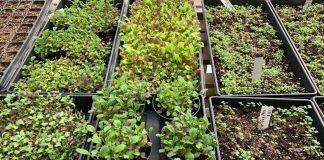 Starting Seeds Indoors: A Beginner's Guide to Seedlings
